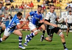 zebre dragons